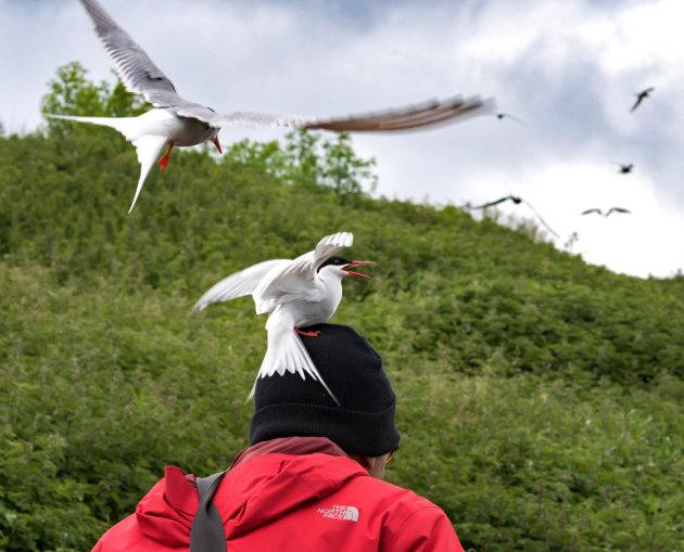 Pas op: Farne eilanden, vogelparadijs