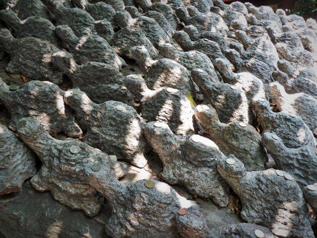 Gelukswensen: Schildpadden met muntje