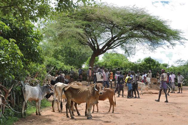Veemarkt onder de acacia