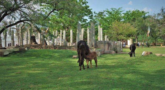 landelijk Anuradhapura