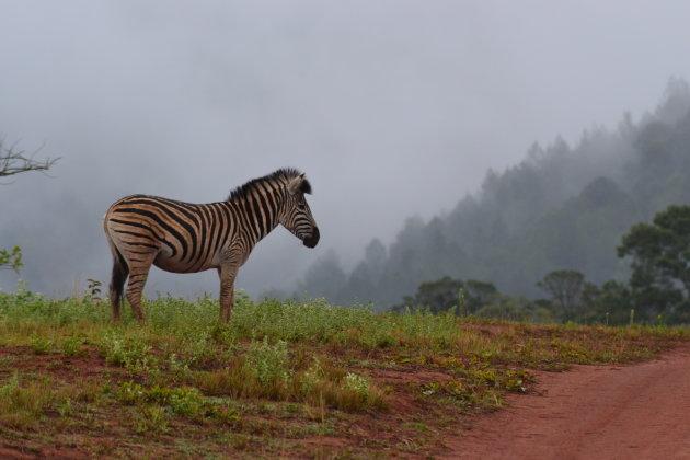 Wandelen tussen wildlife