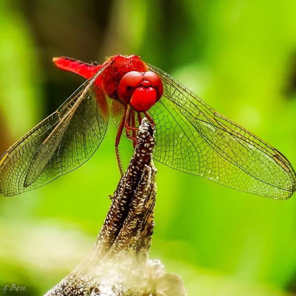 '571088' door Dragonfly