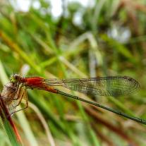 '571229' door Dragonfly