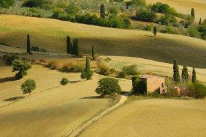 Toscaanse cipressen.