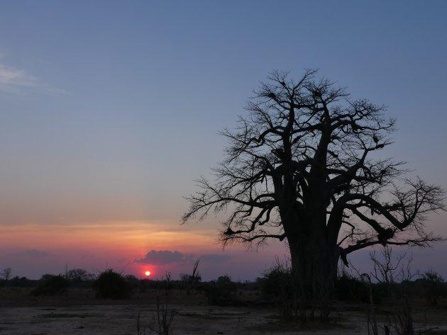zonsondergang in  South Luangwa NP