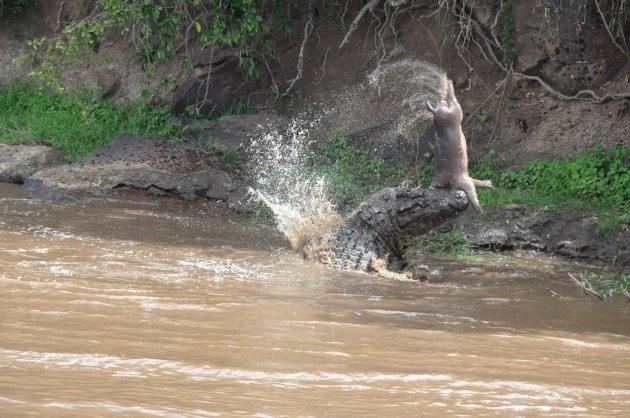 Leven en dood in de Mara River