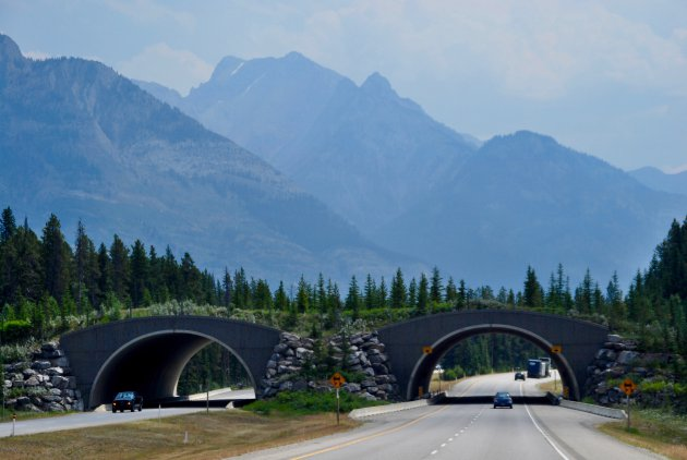 Wildviaduct in Banff National Park