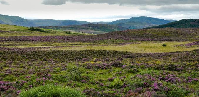 Kom helemaal tot rust in het Schotse heidelandschap