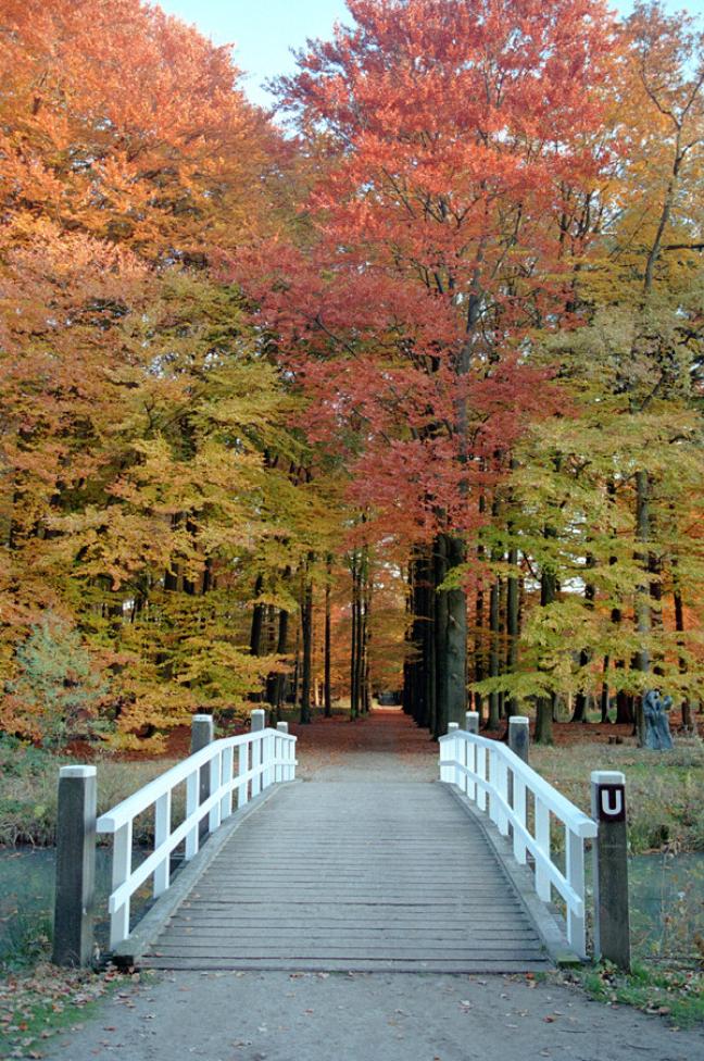 Herfst in Bilthoven