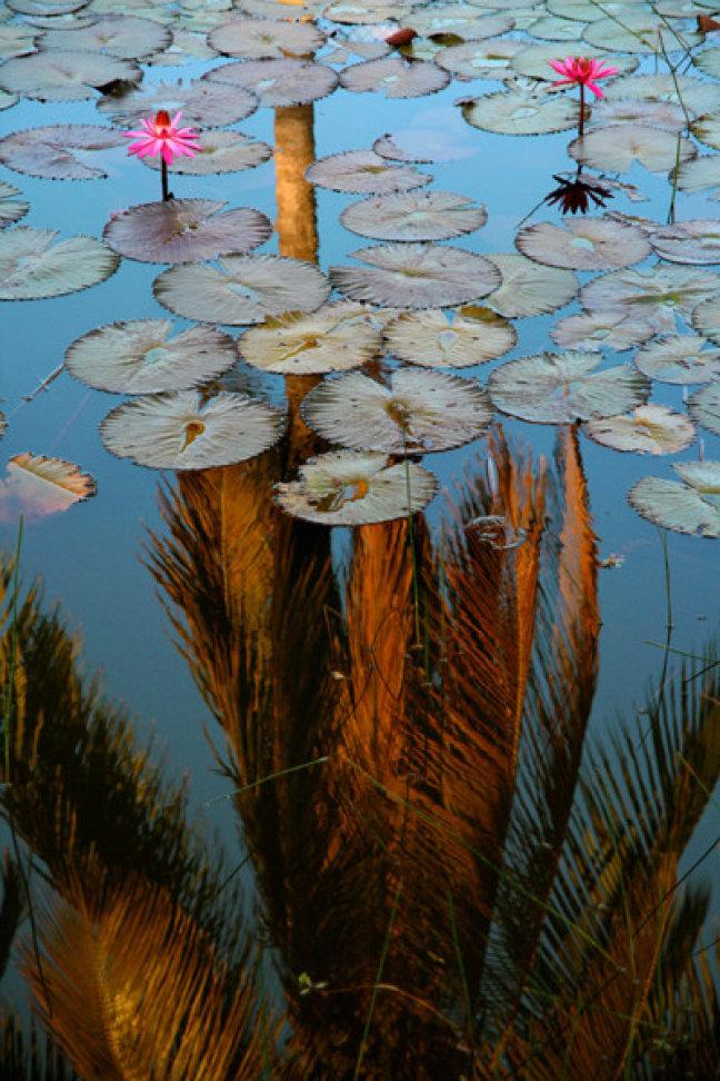 Palm refletion