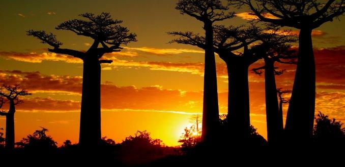 De Baobablaan
