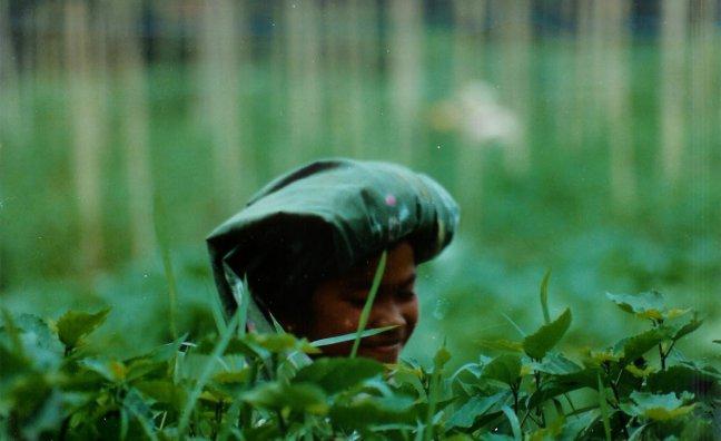 1997: Sumatra: theeplukster.