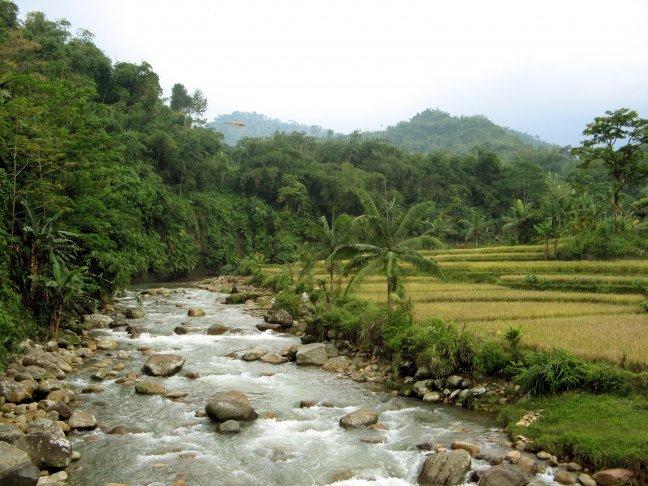 Sawa's langs een riviertje