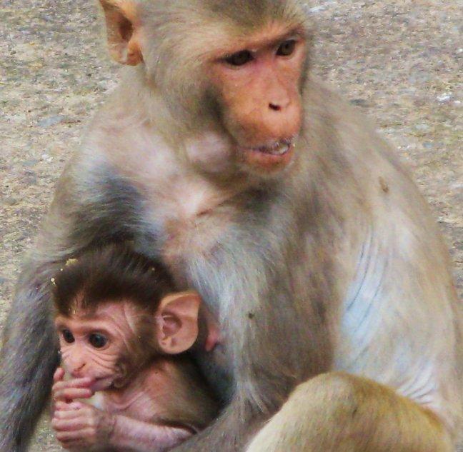 Moeder & Baby