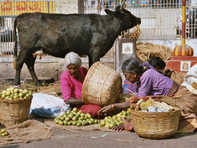 India pur sang