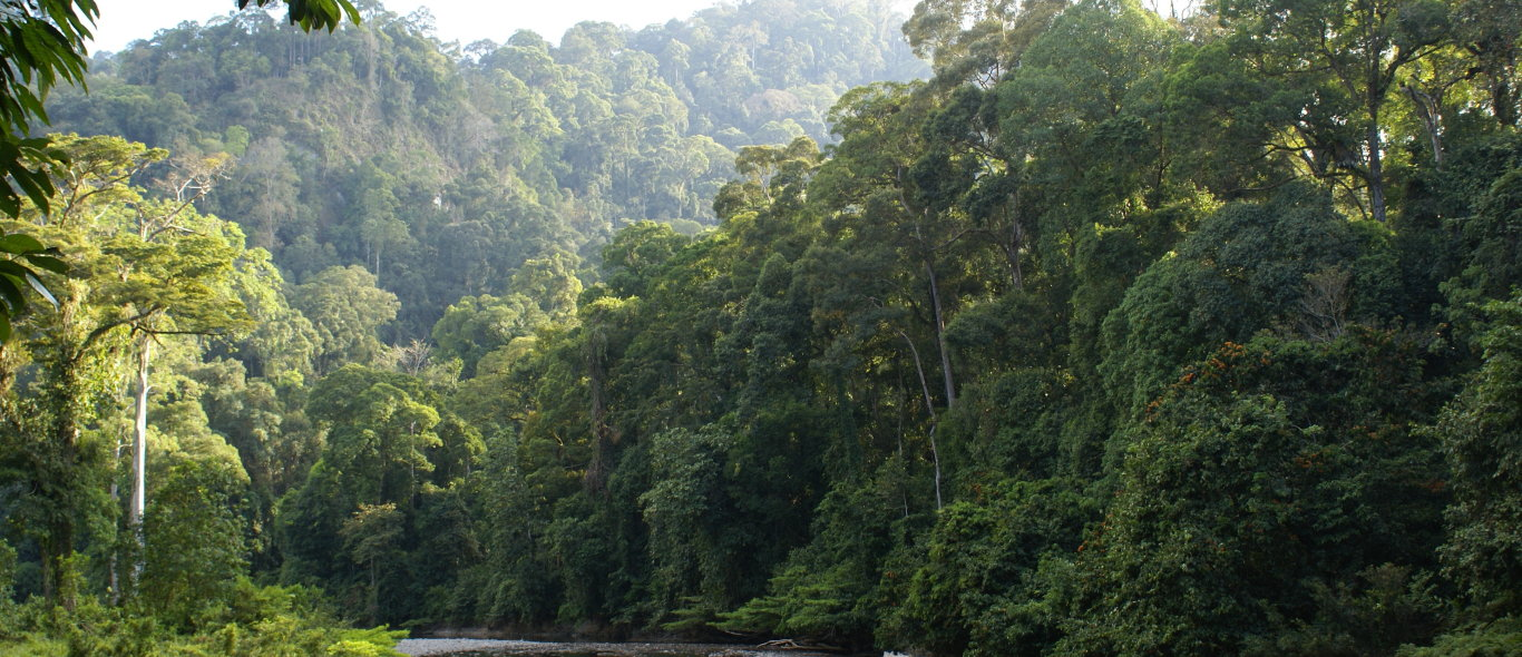 Danum Valley image