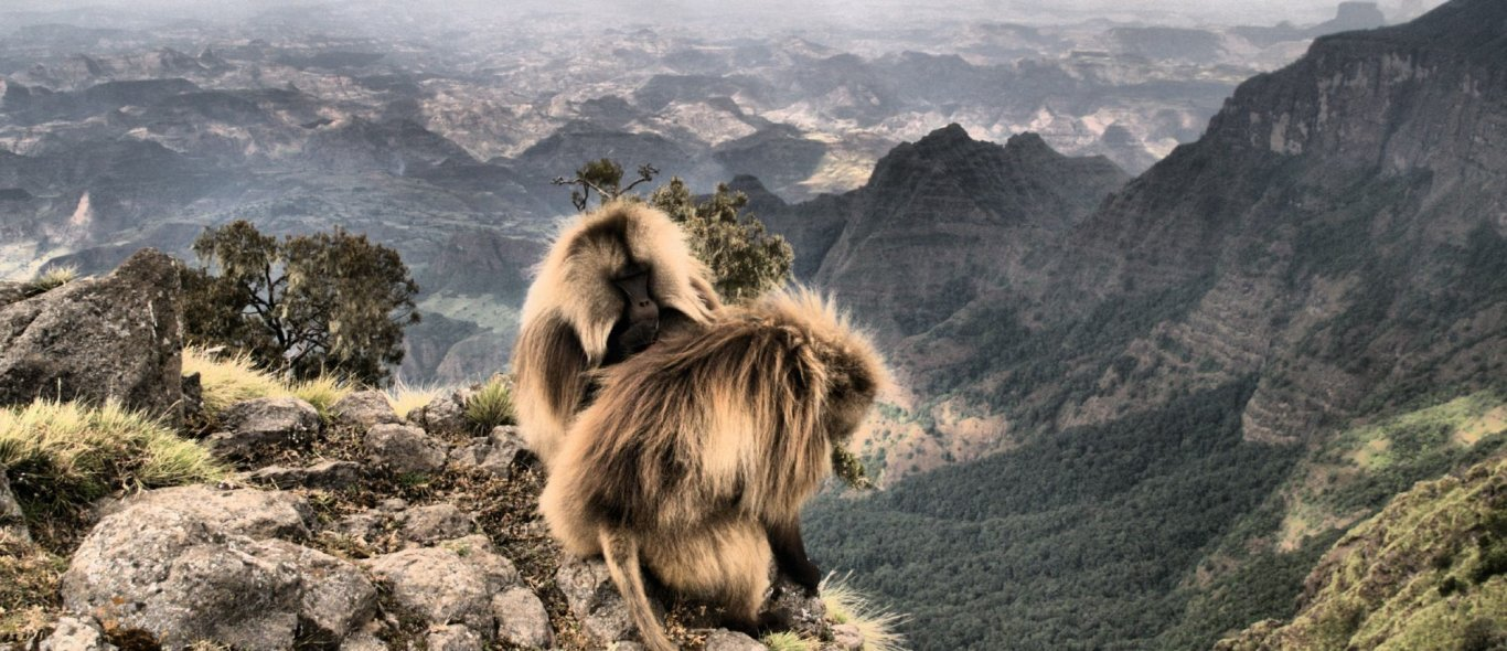 Simien NP image