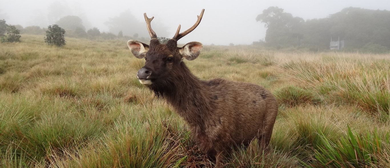 Horton Plains image