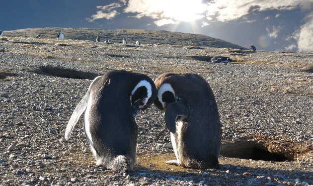 Intro foto Punta Arenas
