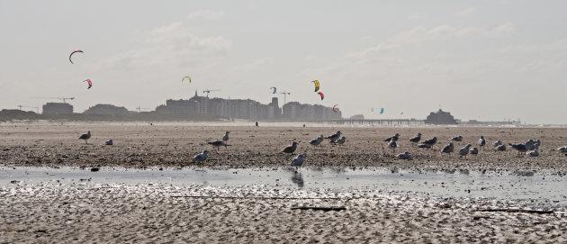 Intro foto Zeebrugge