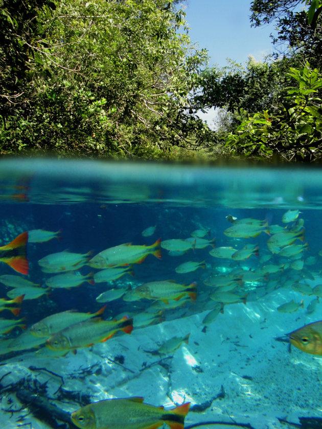 Intro foto Pantanal