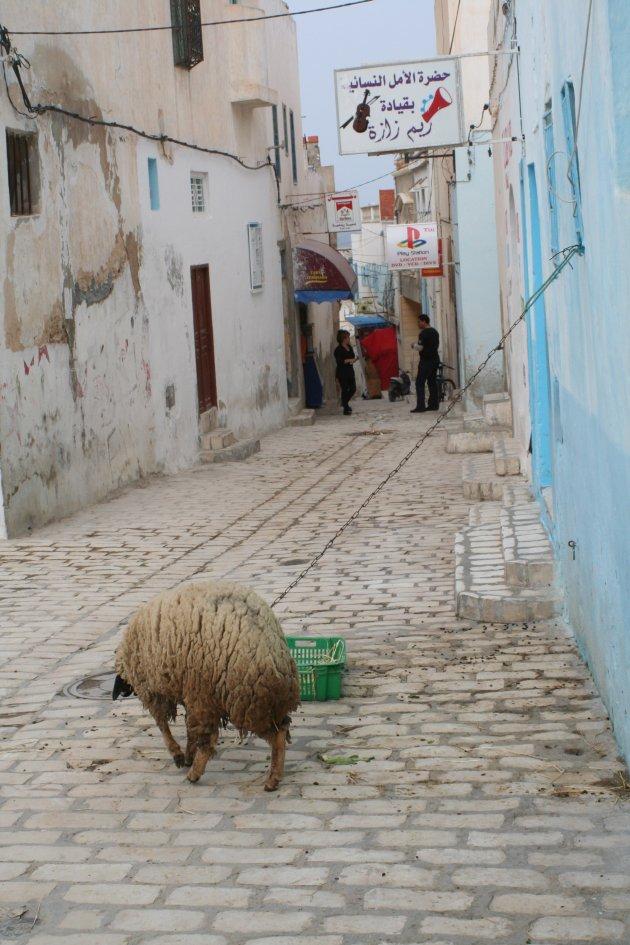 Eenzaam schaap