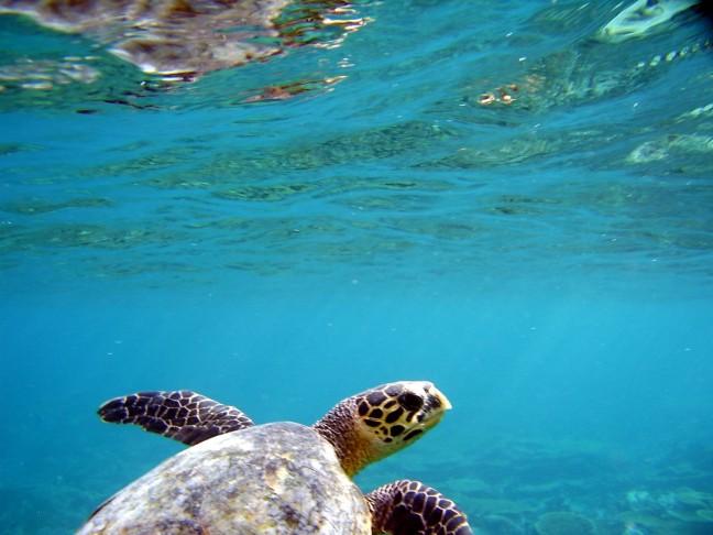 Zwemmen met een schildpad