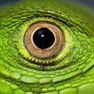 profile image damfschoenmakers