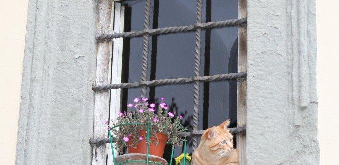 Kat uit het raam in Cortona