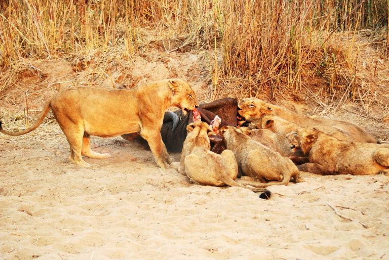 Hoofdfoto bij reisverhaal 'Schitterend Sabi Sands!!'