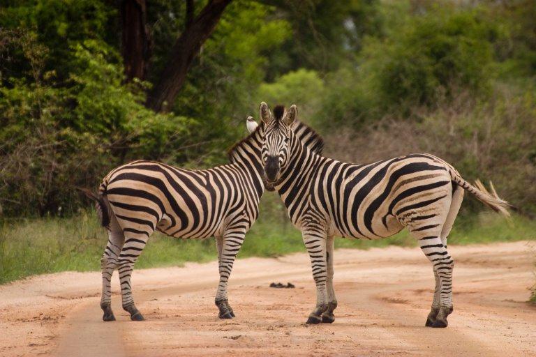 Hoofdfoto bij reisverhaal 'Sabi Sand, Kruger en Blyde River'