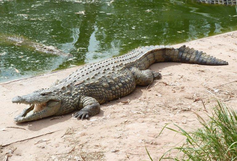 Hoofdfoto bij reisverhaal 'Krokodillenbillen en Krokodillentranen'