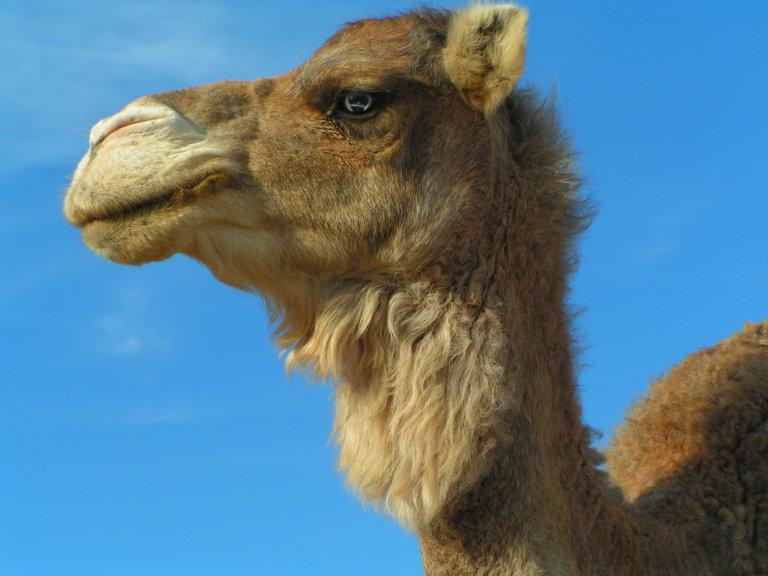 Hoofdfoto bij reisverhaal 'Trip naar Marokko - deel 18.1'