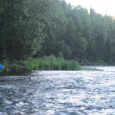 Voorvertoning Vissen bij Cooper Landing in de Russian River. In juli zwemt er veel zalm.