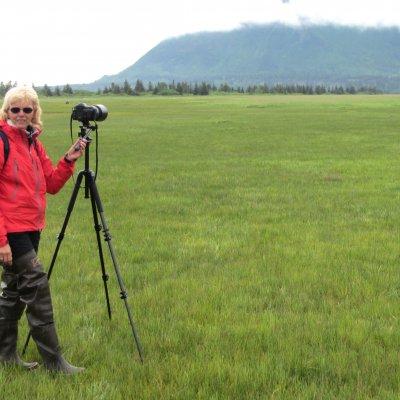 Voorvertoning Van heel dichtbij zie je heel veel beren in Katmai National Park.
