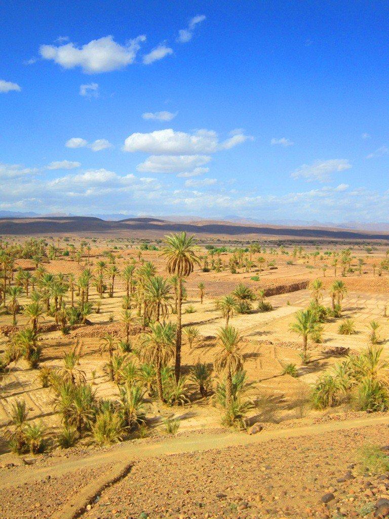 "Grootste ""palmería"" van Marokko"