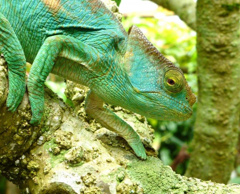 Prachtige kameleons in Madagaskar Exotique