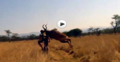VIDEO: Fietser geramd door antilope