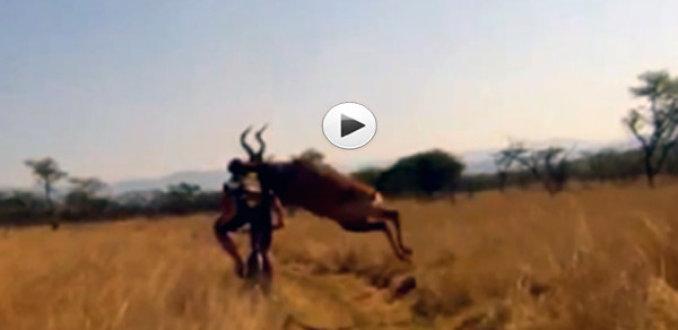 VIDEO: Fietser geramd door antilope