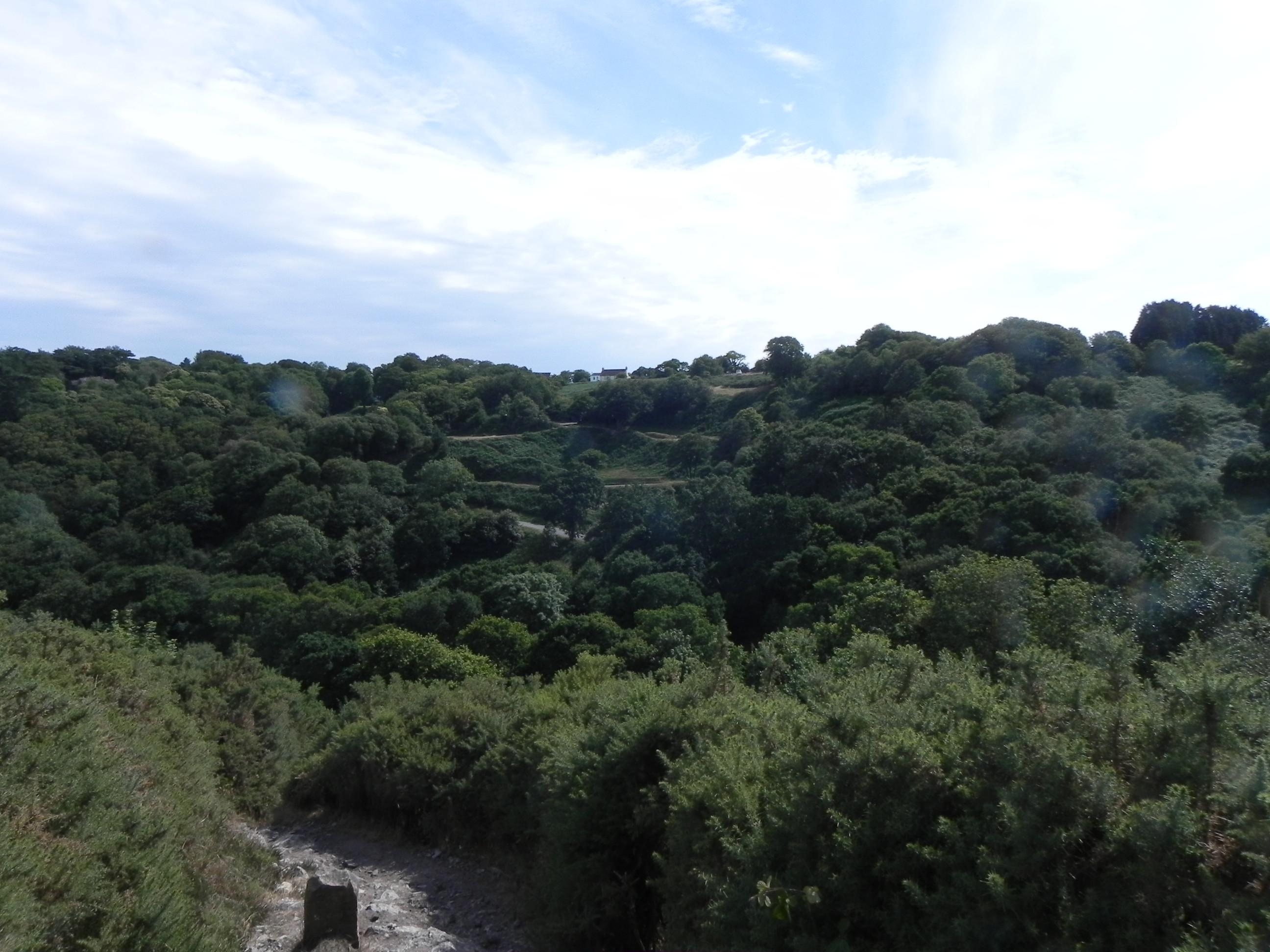 Schitterend bosgebied