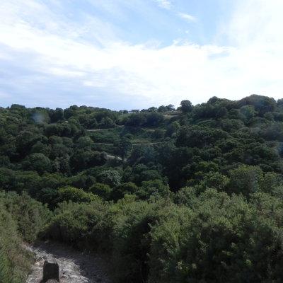 Voorvertoning Schitterend bosgebied