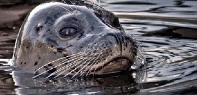 Video: Jonge zeehonden willen ook surfen…