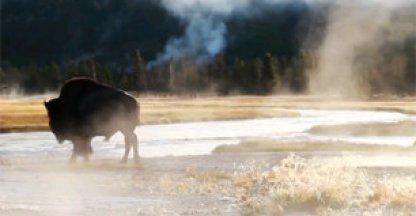 Video: Yellowstone zoals je het niet eerder zag