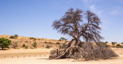 Blog van de week: Crossen in de Kalahari