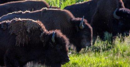 Dit moet je dus absoluut niet doen in Yellowstone park