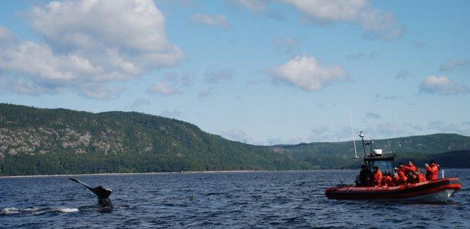 Wow! Zo dichtbij kwamen deze toeristen bij een walvis