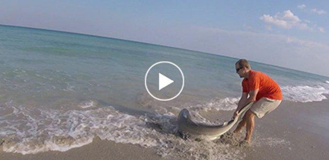 Reddingsactie: man bevrijdt haai