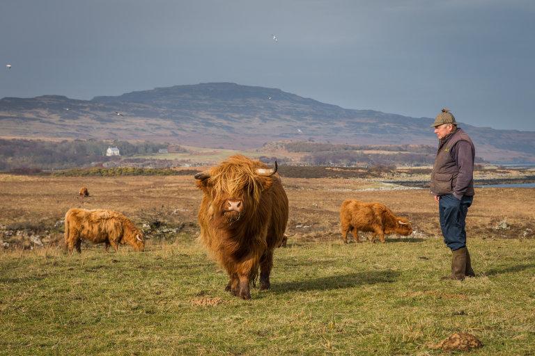 Hoofdfoto bij reisverhaal 'Op de boerderij in Schotland (dag 6)'