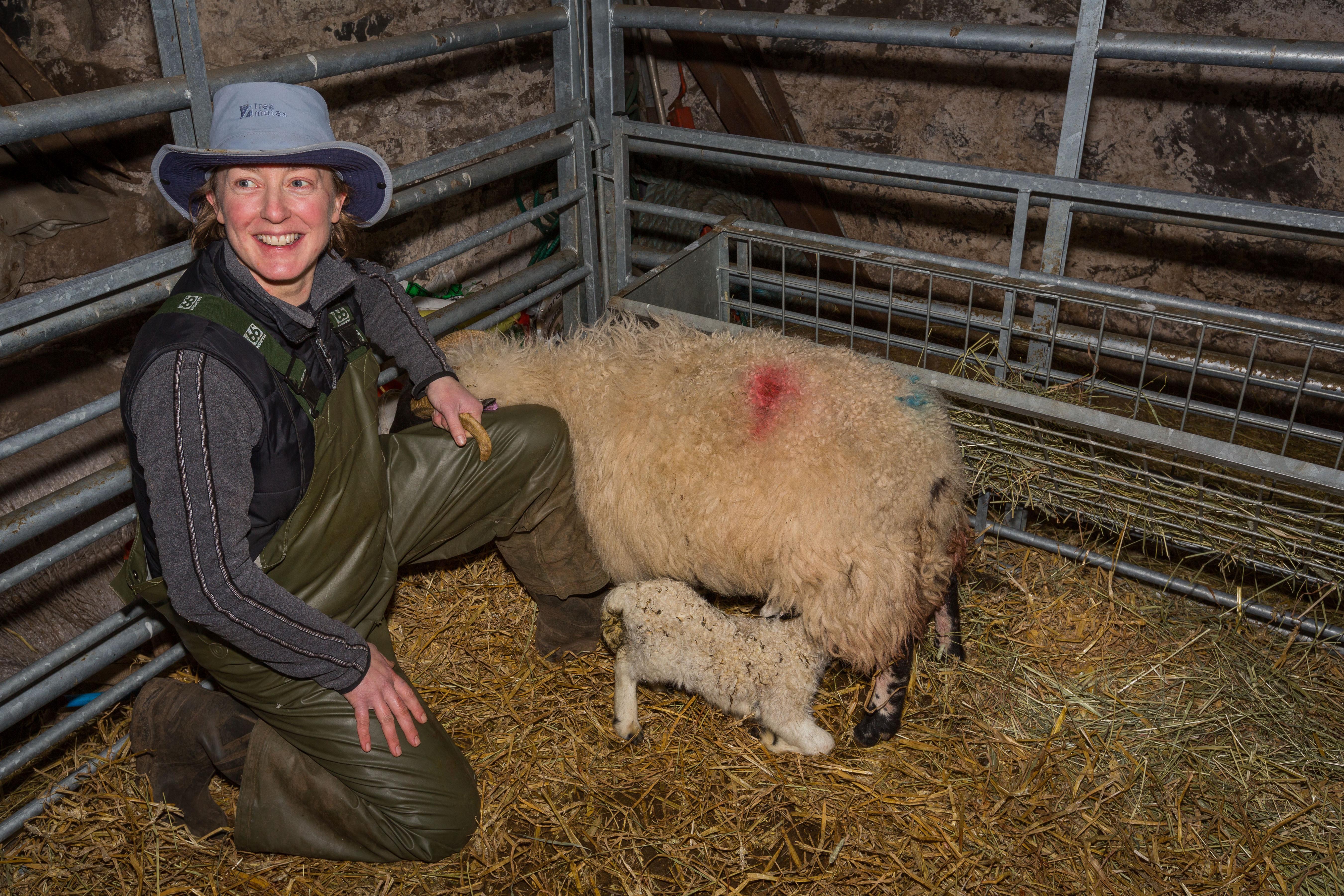 Helen in de stal met het pasgeboren lammetje.