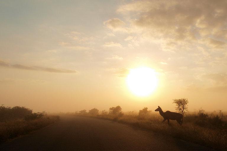 Hoofdfoto bij reisverhaal 'Een dag in het kruger national park'